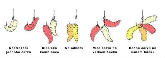 nastražení červů