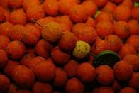 LK Baits Mini boilie Compot N.H.D.C. 12mm, 500 g