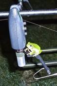Flajzar Signalizátor záběru FISHTRON Q9 - modrý